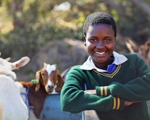 zimbabwe-goat-distribution